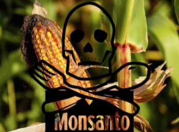 Genetically Engineered Food – the Lie That Won't Die