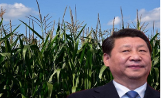 China Buying Up American Corn Due To Flooding, Creating Food Shortage Crisis